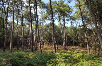 Office National des Forêts : actualités
